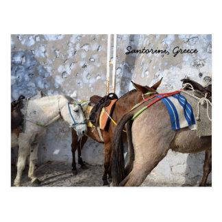 Santorini, Greece - Donkeys Postcard