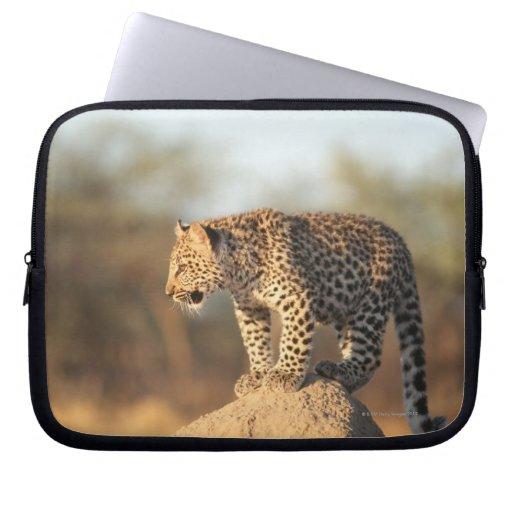 Santuario de fauna de Harnas, Namibia Mangas Computadora