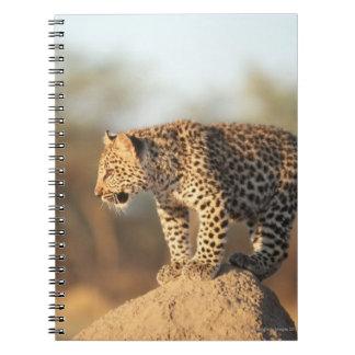 Santuario de fauna de Harnas, Namibia Libreta