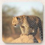 Santuario de fauna de Harnas, Namibia Posavasos De Bebidas