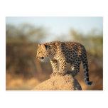 Santuario de fauna de Harnas, Namibia Postal