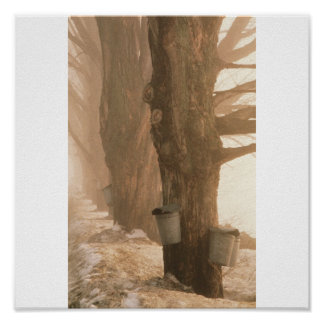 Sap Buckets, Underhill, VT Print