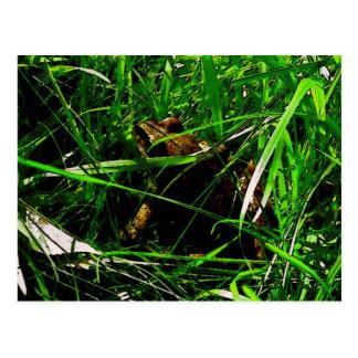 Sapo de Brown en hierba también Postal