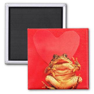 Sapo de la rana delante de la foto roja del corazó imán cuadrado