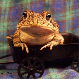 Sapo de la rana en carro negro con el fondo de la esculturas fotográficas