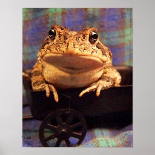 Sapo de la rana en carro negro con el fondo de la  poster
