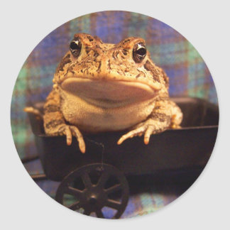 Sapo de la rana en carro negro con el fondo de la pegatina redonda