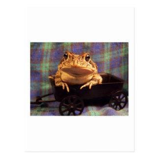 Sapo de la rana en carro negro con el fondo de la postal