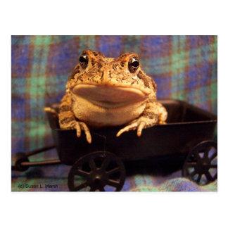 Sapo de la rana en carro negro con el fondo de la postales