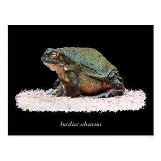 Sapo del río Colorado - alvarius de Incilius Tarjeta Postal