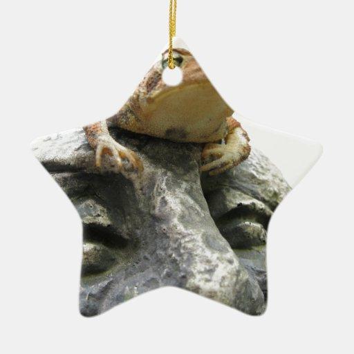 Sapo en roca feliz de la cara del jardín adorno de cerámica en forma de estrella