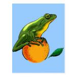 Sapo y naranja tarjetas postales