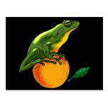 Sapo y naranja verdes postales