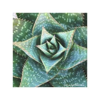Saponaria del áloe que muestra su simetría impresión en lienzo