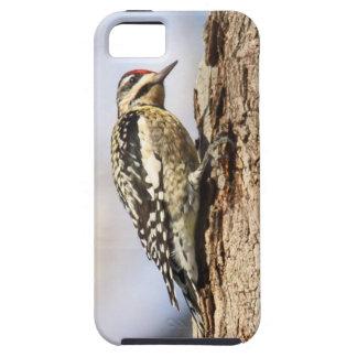 Sapsucker Amarillo-hinchado Funda Para iPhone SE/5/5s