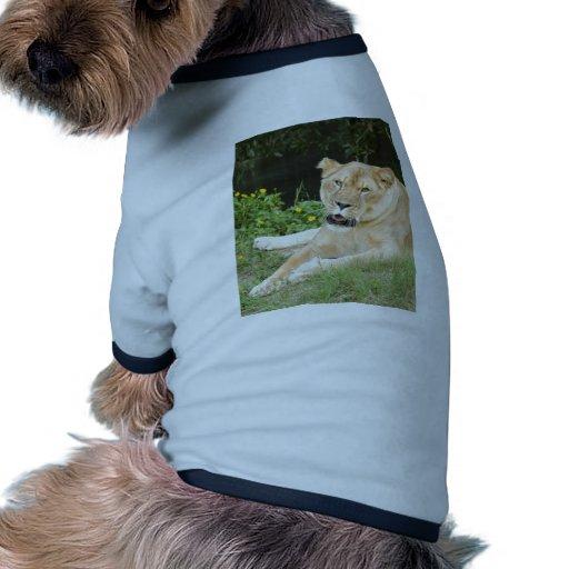 sarabi-set-1-012 dog tshirt