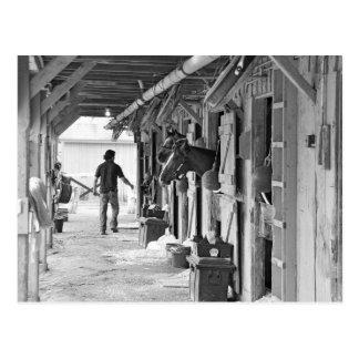 Saratoga Shedrow at Horse Haven Postcard