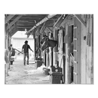 Saratoga Shedrow en el asilo del caballo Cojinete