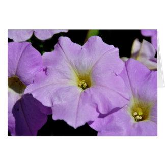 Saratoga's Mid-August Purple Wild Flower Card
