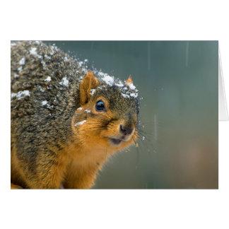 Sarcastic Squirrel Card