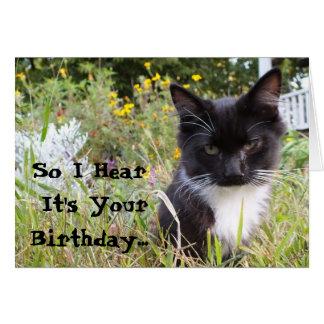 Sarcastic Tuxedo Kitten Birthday Card