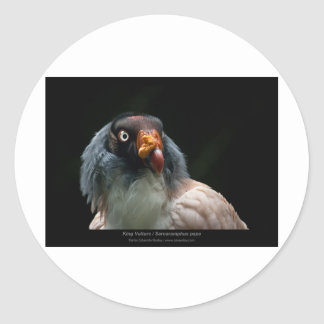 Sarcoramphus papa - King Vulture 01 Classic Round Sticker