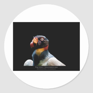 Sarcoramphus papa - King Vulture 02 Classic Round Sticker