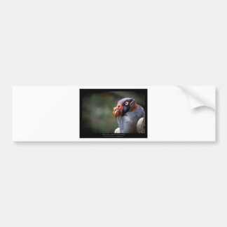 Sarcoramphus papa - King Vulture 03 Car Bumper Sticker