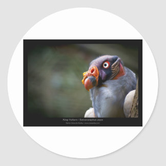 Sarcoramphus papa - King Vulture 03 Classic Round Sticker