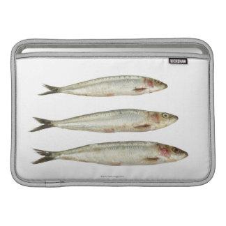 Sardinas (sardinas) 2 fundas para macbook air