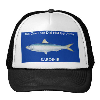 Sardinella Aurita sardina Gorros