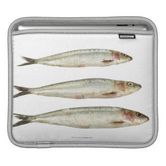 Sardines (Pilchards) 2 Sleeve For iPads