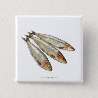 Sardines (Pilchards) Button
