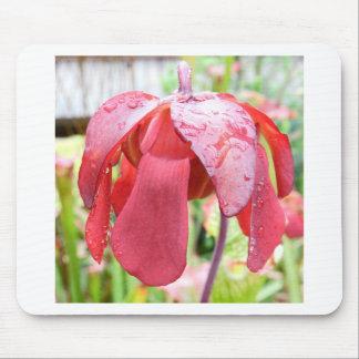 Sarracenia Flower Mousepads
