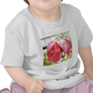 Sarracenia Flower Tshirts