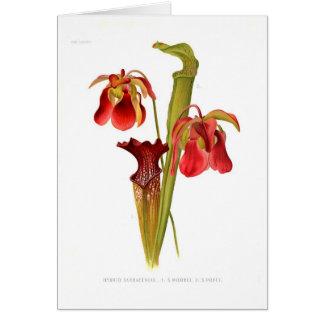 Sarracenia hybrids card