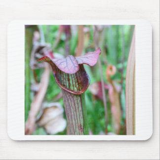 Sarracenia Plant Mouse Pads