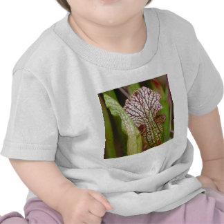 Sarracenia Plant Shirts