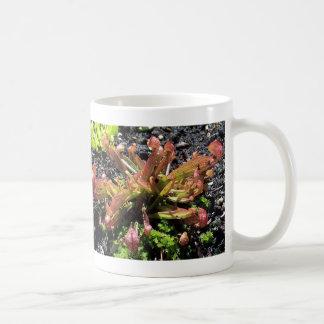 Sarracenia psittacina classic white coffee mug