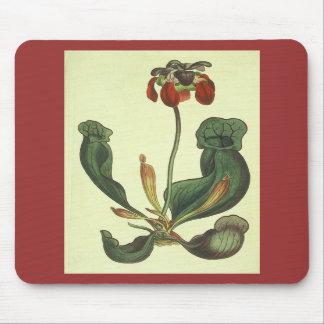 Sarracenia purpurea mouse pads
