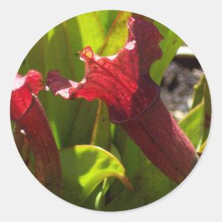 Sarracenia sticker