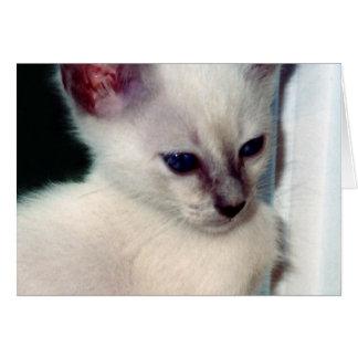 Sasha Kitten Card