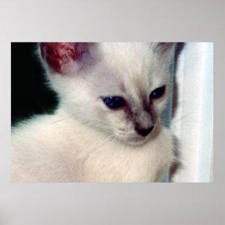 Sasha Kitten Poster