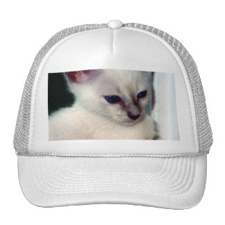 Sasha Kitten Trucker Hat