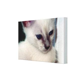 Sasha Kitten Wrapped Canvas Canvas Print
