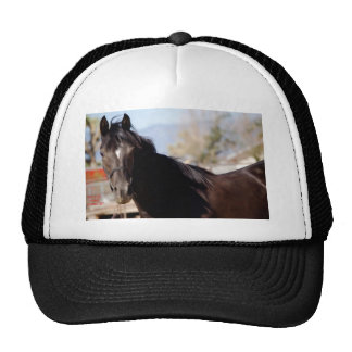 Sassy - Did You Bring Carrots? Trucker Hat