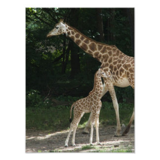 Sassy Giraffe Calf Photo Print