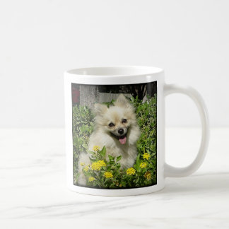 Sassy - Happiness is the love of an adopted Pomera Classic White Coffee Mug