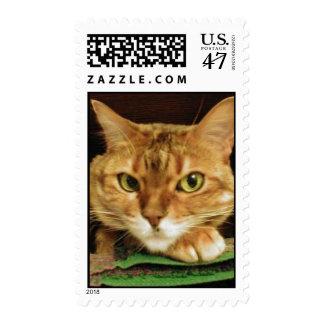 Sassy -  Postal Stamp