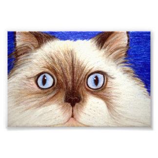 Sassy the Himalayan Cat 5 x 7 Photo Print